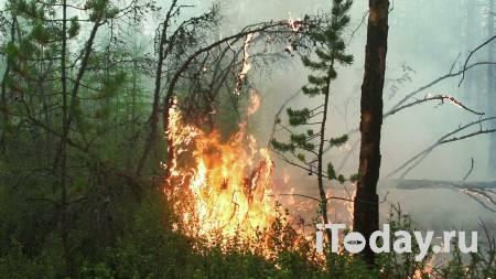 Гарь от лесных пожаров в Якутии почувствовали на арктических станциях