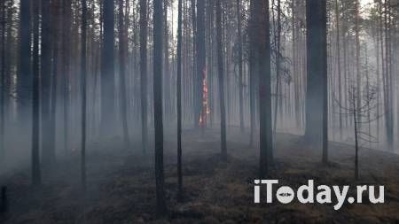 Власти Оренбурга подготовили пункт эвакуации из-за природных пожаров - 03.08.2021