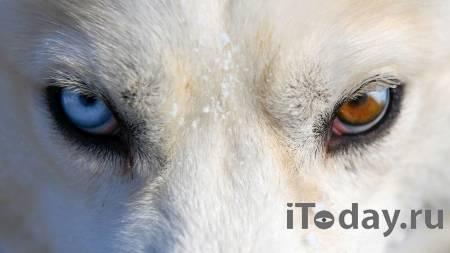 На Ямале расследуют нападение стаи собак на ребенка
