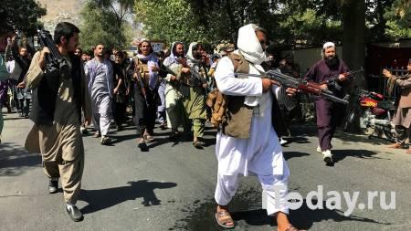 Талибы заявили, что в Афганистане пройдут всеобщие выборы