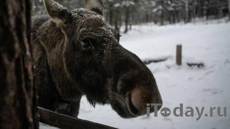 В Тверской области будут судить обвиняемых в убийстве лосихи - 10.09.2021